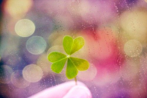 Clover_3_by_S_Banh.jpg