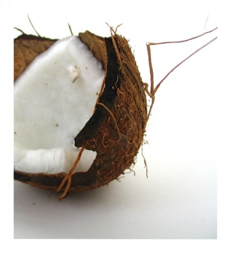 coconut_by_divinedecay.jpg